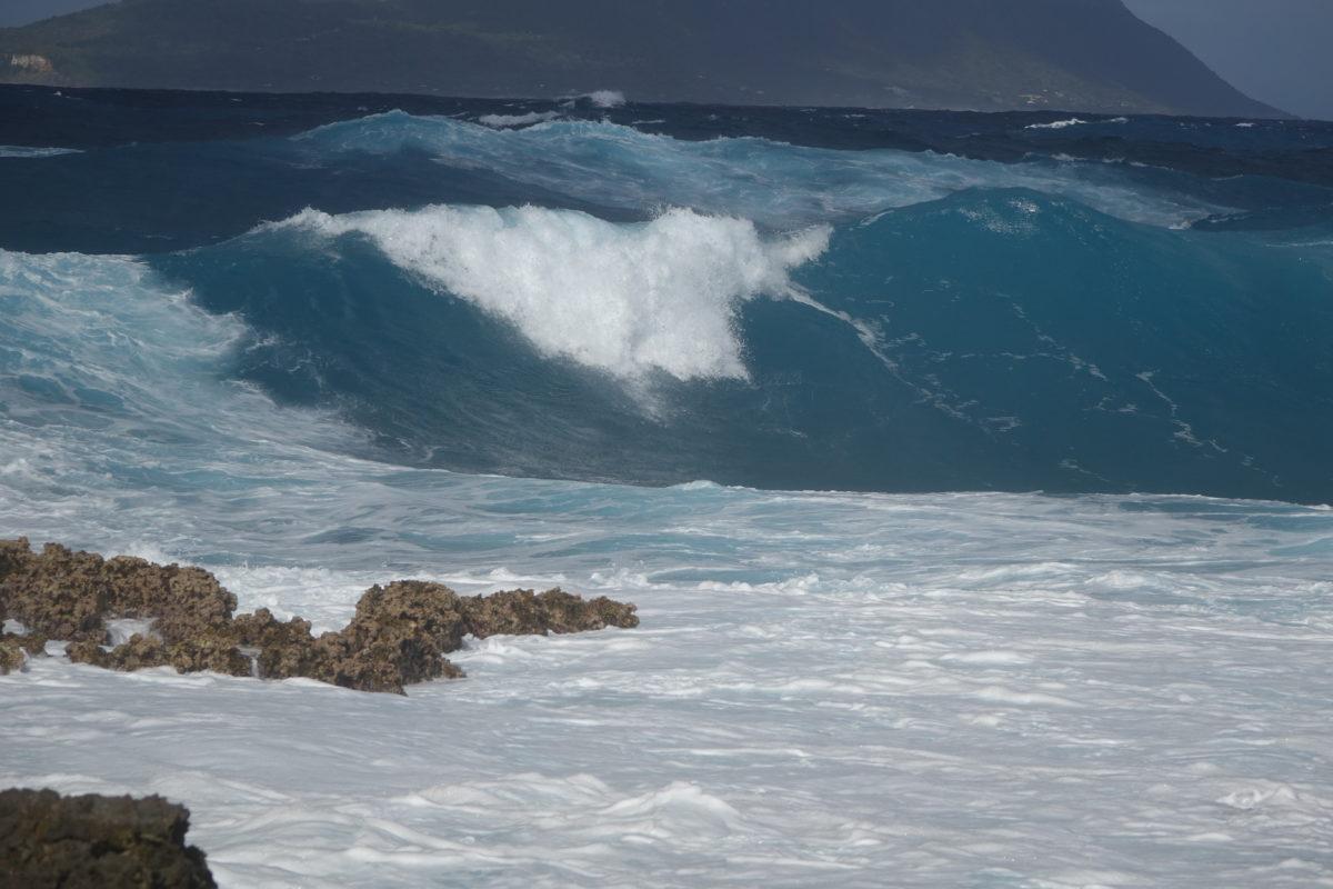 ENVIRONNEMENT 158 1200x800 - Guadeloupe, Sargasses : Tout savoir pour planifier votre trip kitesurf