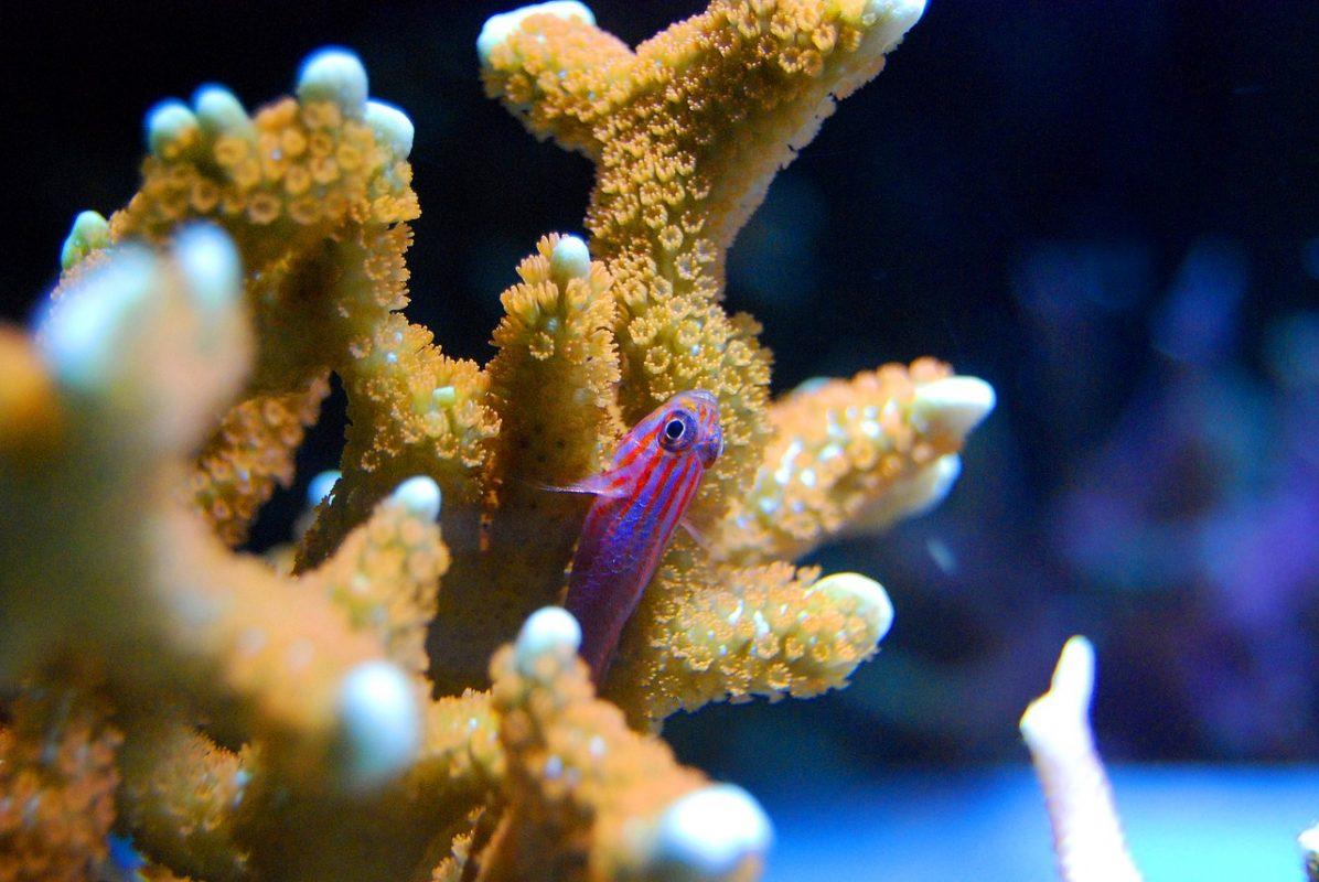 disparition coraux crème solaire