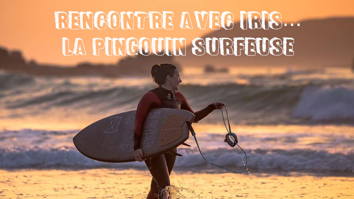vignette-article-iris-la-pingouin-surfeuse